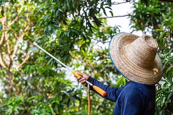 Homem pulverizando inseticida em plantação